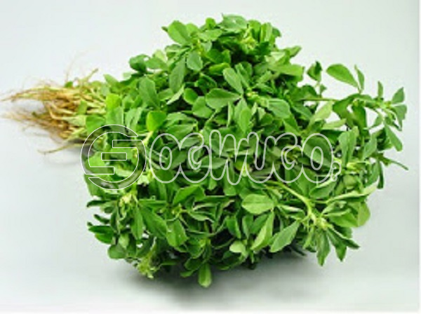1 big fresh head of water leaf sold at very affordable price used by expertise in production of different type of medicine.Gives your food an attractive look.