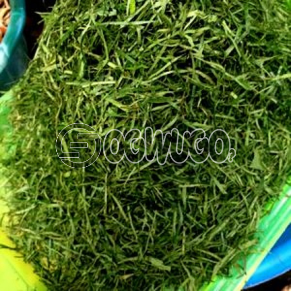 Calabar uziza leaf 250 naira per head very nutritious and affordable They are added to soups at the end of cooking, in the last 15 minutes.
