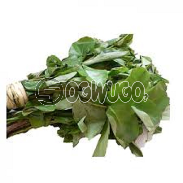 Fresh oha leaf used in the preparation of nigerians popular soup,oha soup.